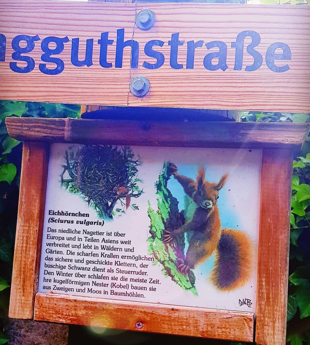 Wunsch Eichhörnchen